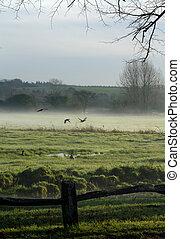 Patos en la niebla