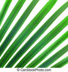 Patrón natural de palmas verdes deja aislados en blanco