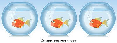 Peces de oro y épocas en el acuario