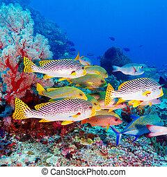 Peces tropicales cerca del arrecife de coral colorido