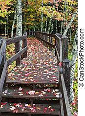 península, superior, michigan, otoño colora