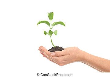 Pequeña planta en manos de mujer