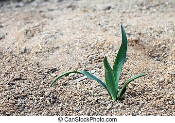 Pequeña planta