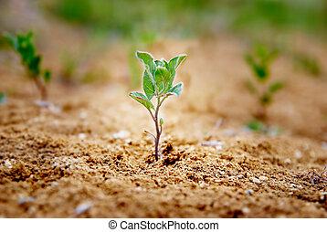 Pequeña planta verde