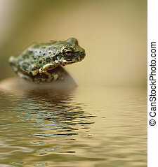 Pequeña rana sentada junto al agua