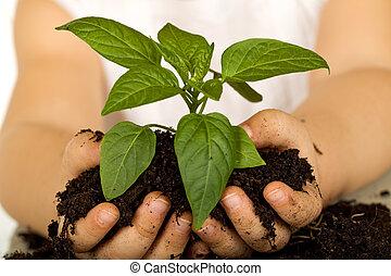 Pequeñas manos sosteniendo una planta nueva