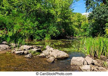 pequeño, bosque, verde, verano, río