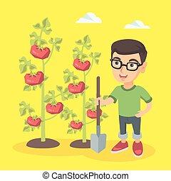 Pequeño granjero caucásico cultivando tomates.