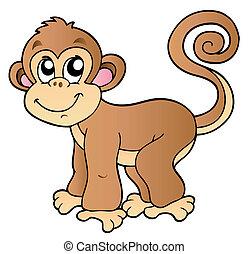 pequeño, lindo, mono