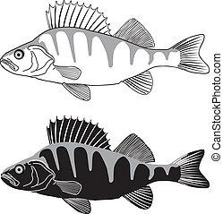 Percha - ilustración de agua dulce