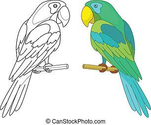 percha, pájaro, loro