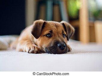 Perky cachorro