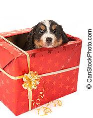 Perrito sorpresa de Navidad