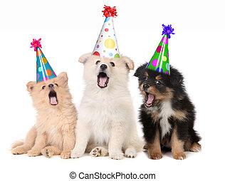 perritos, cumpleaños, canto, feliz, canción