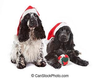 Perritos de Navidad
