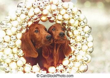 perritos, navidad, serrers, dos