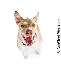 Perro activo gracioso mirando hacia arriba
