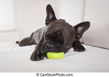 Perro agotado después de jugar