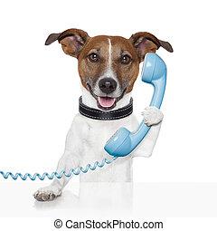 Perro al teléfono hablando