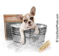 Perro bañándose en una ducha en el estudio