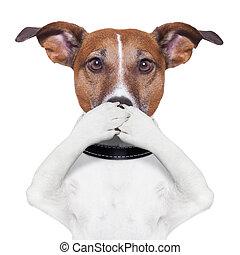 perro, boca, cubierta