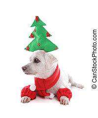 Perro cachorro en Navidad
