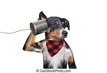 perro, can), (tin, teléfono