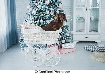 Perro cerca del árbol de Navidad
