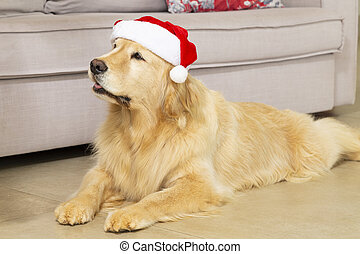 perro, claus, santa, navidad, hat., piso, acostado