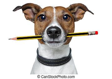 Perro con lápiz y borrador
