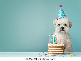 Perro con pastel de cumpleaños