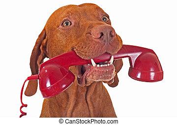Perro con teléfono rojo