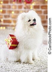 Perro concentrado con regalos de Navidad mirando hacia arriba