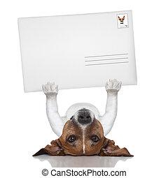 perro, correo