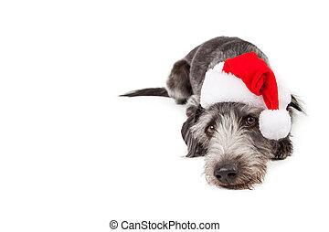 Perro cruzado de Santa tumbado con espacio de copiado