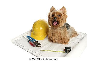 Perro de construcción