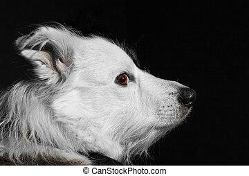 Perro de fondo negro