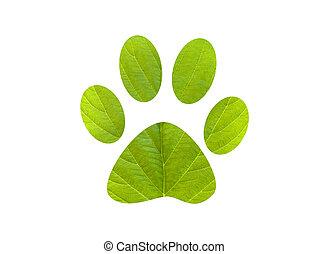 Perro de huellas de pie verde