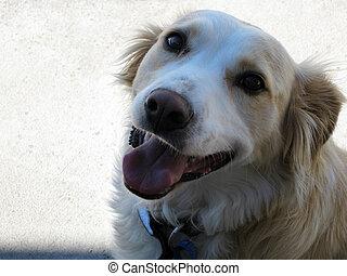 Perro de mascota