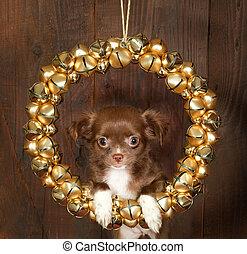 Perro de Navidad Chihuahua
