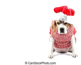 Perro de Navidad como Santa