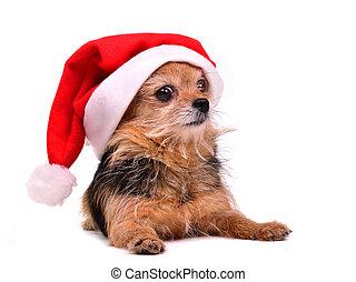 Perro de Navidad con sombrero de Papá Noel rojo