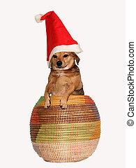 Perro de Navidad