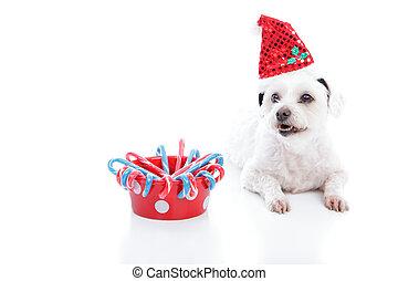 Perro de Navidad y bol