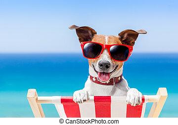 Perro de vacaciones de verano