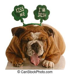 Perro del día de San Patricks