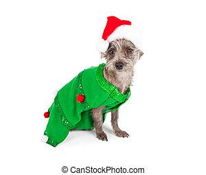 Perro desaliñado vestido como árbol de Navidad