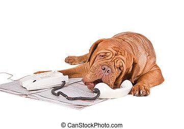 Perro discutiendo por teléfono