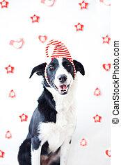Perro disfrazado en Navidad