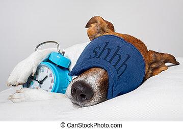 Perro durmiendo con despertador y máscara de dormir
